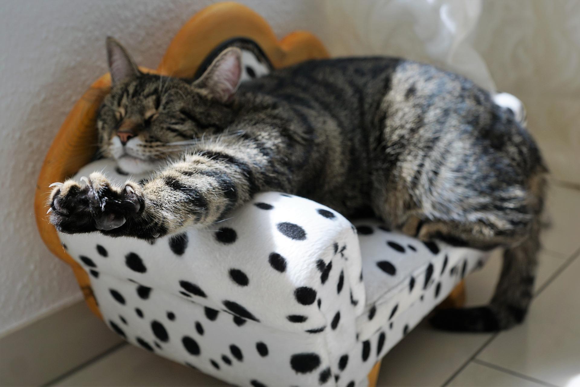 chat qui gère son stress en s'étirant